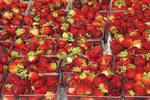 Strawberries for Sale, Farmer's Market, Appleton, Wisconsin