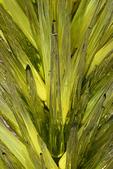 Glass Sculpture close-up, Desert Botanical Garden, Phoenix, Arizona