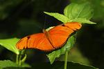 Julia Butterfly, Butterfly Place, Westford, Massachusetts