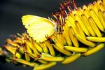 False Dotted Border Butterfly, Kruger National Park, South Africa