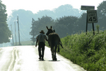 Amish Man & Horse on Road, Lancaster County, Pennsylvania