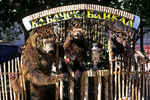 Bear Skins at Market, Irkutsk, Lake Baikal, Siberia, Russia