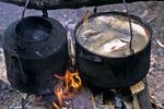 Cooking Fish, Lake Baikal, Siberia, Russia