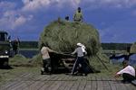 Gathering Hay for Winter, Ust-Barguzin, Siberia, Russia