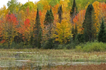 Fall Color and Wetland, Northern Wisconsin
