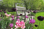 Tulips and Bench in Garden, Paine Art Center, Oshkosh, Wisconsin