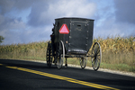 Amish Buggy on the Road, Shawano, Wisconsin