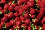 Freshly Picked Strawberries, Prellwitz Strawberries, Ripon, Wisconsin