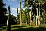 Village Pillars, Sepik River Area, Papua New Guinea