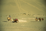 Desert Riders with Camels, Dunhuang, China