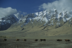 Camels In Taklamakan Desert with Mountains, Xinjiang Uyghur, China