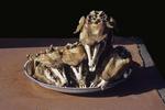 Cooked Goats Heads, Sunday Market, Kashgar, China