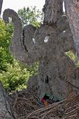 Horton Hatches The Egg, Bookworm Gardens, Sheboygan, Wisconsin