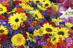 Flowers for Sale, Farmer's Market, Appleton, Wisconsin
