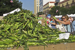 Sweet Corn for Sale, Farmer's Market, Appleton, Wisconsin