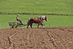 Amish Farmer Seeding Field, Columbia County, Wisconsin