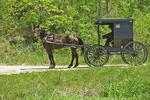 Amish Buggy and Horse, Sauk County, Wisconsin