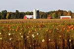 Pumpkin Field and Farm, Navarino, Wisconsin