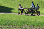 Amish Family in Wagon Going to Sunday Service, Bonduel, Wisconsin