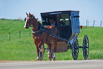 Amish Family in Buggy Going to Sunday Service, Bonduel, Wisconsin