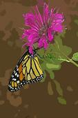 Monarch on Monarda in Cutout, Appleton, Wisconsin