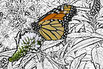 Monarch on Butterfly Bush in Yard with Modern Filter Photocopy, Appleton, Wisconsin