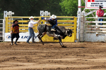 Bull Riding Competition, Mid-Western Rodeo, Manawa, Wisconsin