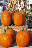 Pumpkins for Sale at the Farmer's Market, Appleton, Wisconsin