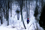 Austin Walking in Woods in Winter, Appleton, Wisconsin