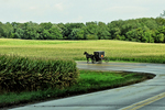 Amish Buggy on Road in Rain with Cornfields, Green Lake County, Wisconsin