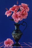Pink Flowers in Urn on Table, Appleton, Wisconsin