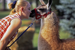 Girl and Llama at Plaumann Park, Appleton, Wisconsin