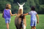Girls & Llama at Plaumann Park, Appleton, Wisconsin
