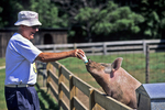 Don Feeding Pig, The Farm, Door County, Wisconsin