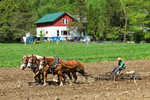 Amish Boy With Horses In Field, Monroe County, Wisconsin