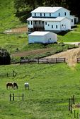 Amish Farm & Horses, Monroe County, Wisconsin