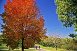 Walking in Fall, Appleton, Wisconsin