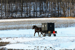 Amish Buggy in Winter On Country Road, Bonduel, Wisconsin