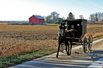 Amish Buggy and Farm in Late Fall, Green Lake County, Wisconsin