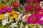 Flowers for Sale, Farmer's Market, Madison, Wisconsin