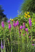 Wildflowers at Olbrich Gardens, Madison, Wisconsin