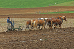 Amish Farmer Plowing Field, Green Lake County, Wisconsin
