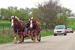 Horses On Road, Green Lake County, Wisconsin