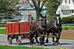 Amish Farmer in Wagon With Horses, Eau Claire County, Wisconsin