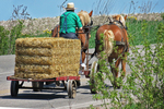 Amish Farmer With Bale Of Hay On Wagon, Eau Claire County, Wisconsin