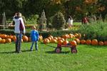 Finding the Right Pumpkin, Little Farmer Pumpkins, Fond du Lac, Wisconsin