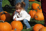 The Pumpkin Is Too Heavy, Little Farmer Pumpkins, Fond du Lac, Wisconsin