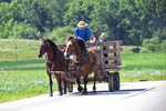Amish Family in Wagon With Horses, Vernon County, Wisconsin