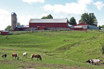 Amish Farm With Horses & Cows, Vernon County, Wisconsin