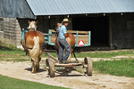 Boy and Horses Going To Barn, Vernon County, Wisconsin